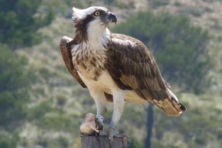 1 9 - Fotógrafa capturou o momento exato em que uma águia carrega um pequeno pássaro em um galho