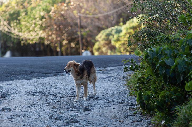 1 6 - Mulher recicla lixo eleitoral e o transforma em casa para cães abandonados. Ela tem ajudado por 13 anos
