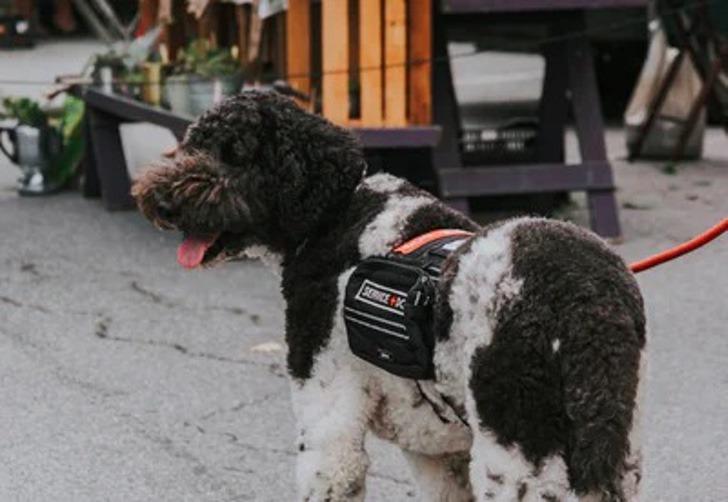 2 5 - Cão de apoio emocional resgatou uma mulher que pensava em tirar sua vida. Ele a atraiu com sua simpatia
