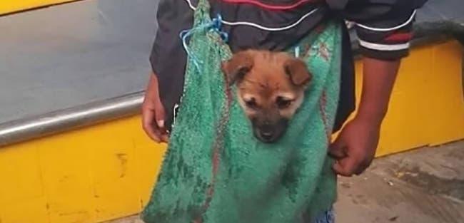 3 6 - Imagem de menino humilde que é ambulante e leva seu cachorrinho numa bolsa emociona os internautas
