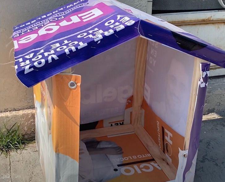 4 5 - Mulher recicla lixo eleitoral e o transforma em casa para cães abandonados. Ela tem ajudado por 13 anos