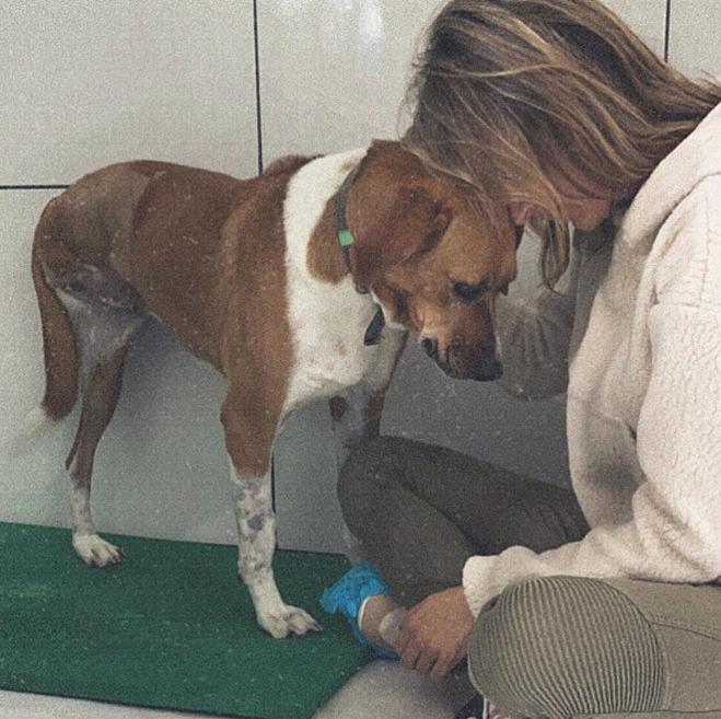 Captura de Tela 326 - Luisa Mell acolhe cachorra rejeitada por não ter uma das patas